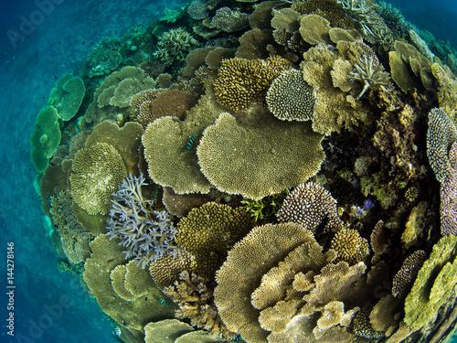 Tuinposter Onder water サンゴ礁