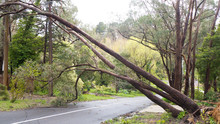 Fallen Tree Resting On Powerlines In The Adelaide Hills, South Australia