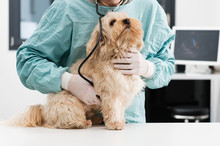 Vétérinaire Et Chien