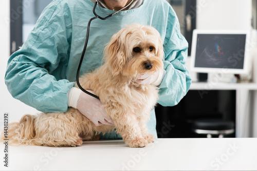 Foto Tierarzt und Hund