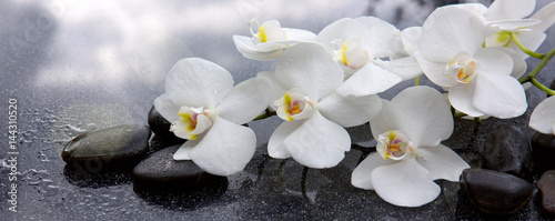 In de dag Orchidee White orchid and black stones close up.