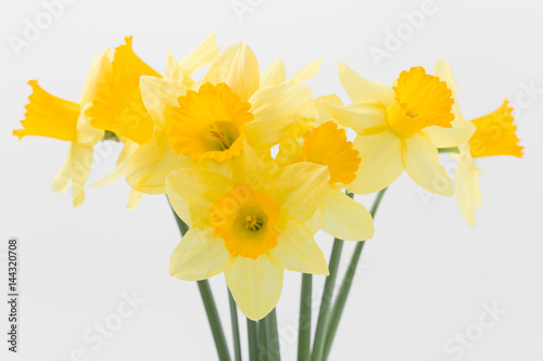 Papiers peints Narcisse Beautiful spring yellow flowers daffodils on a white background