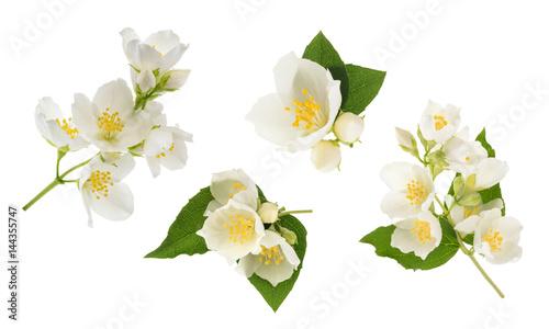 Fotografie, Obraz  Jasmine flower isolated on white. without shadow