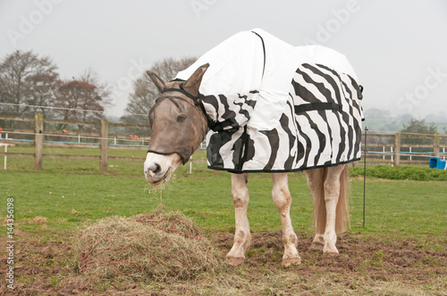 fly rug to help protect him against