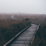 Boardwalk through Misty Tall Grass - 144389554
