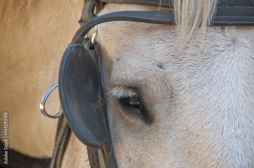Photo Closeup of Horse and Blinder
