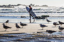 Mews Flock On The Atlantic Oce...