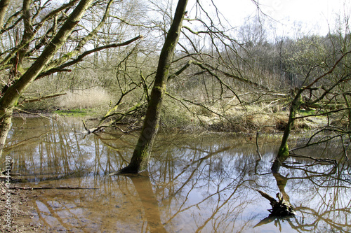 Biotope, Nature conservation, Blumenthal, Lower Saxony, Germany, Europe Canvas Print