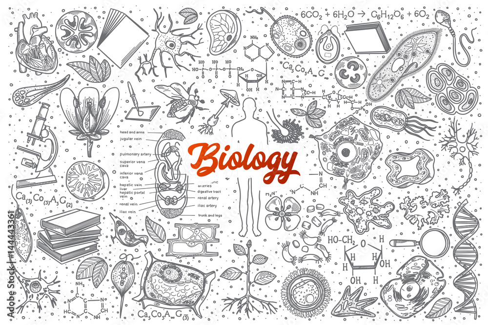 Fototapeta Hand drawn Biology doodle set background with red lettering in vector
