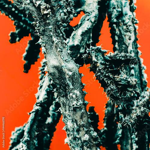 Fototapeta kaktus na czerwonym tle