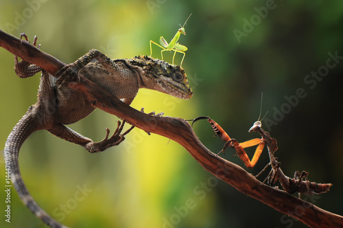 Fotografie, Obraz  Helping the little mantis
