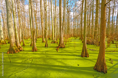 Fotografie, Obraz  Sun Breaking Through on a Cypress Swamp