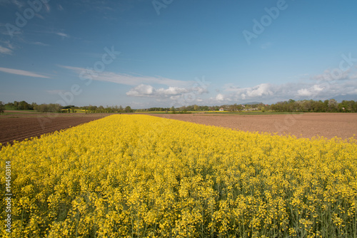 Foto op Aluminium Oranje rapeseed oil fields between the moraine hills of Buja. Friuli
