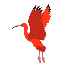 Scarlet Ibis Vector Illustrati...