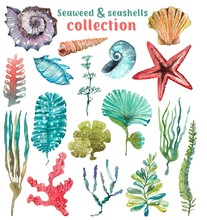 Watercolor Sea Life, Seaweed, Shell, Beautiful Collection