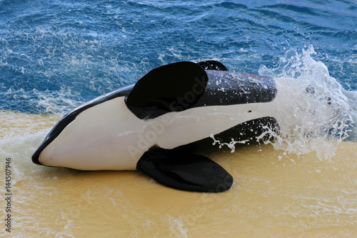 Tuinposter Canarische Eilanden Orca, Tenerife, Canary Islands, Spain