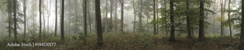 Garden Poster Pale violet Panorama landscape image of Wendover Woods on foggy Autumn Morning.