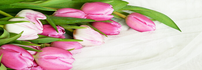 Fototapeta Tulipany Pink tulip flowers on white tulle background