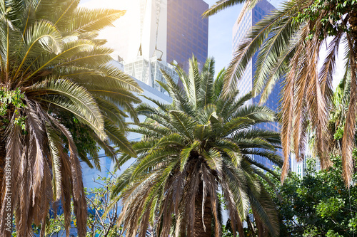 Poster Los Angeles Downtown; Palms in a row stand in the background of skyscrapers in the city of Los Angeles