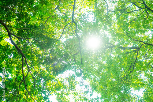 Keuken foto achterwand Bomen ecoイメージ