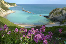 Man Of War Bay Near Durdle Door, Dorset, England UK The Jurassic Coast A UNESCO World Heritage Site