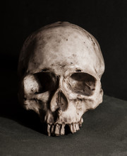 Scull Antropology