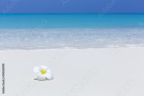 Deurstickers Frangipani white plumeria flower on sandy pristine beach