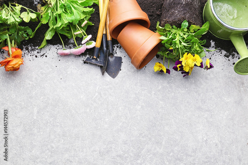 Papiers peints Pansies Composition with flowers and gardening tools with space for text