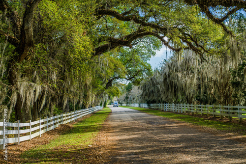 Fotografía  country road, spanish moss, louisiana