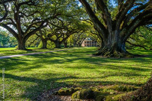 Photo  oak alley historic plantation, louisiana