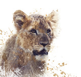 Young Lion watercolor