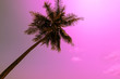 Leinwanddruck Bild - abstract coconut tree in sky with vintage filter - can use to display or montage on product