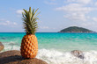Pineapple on the background of the Andaman sea, the Pacific ocean. Thailand Similan Islands