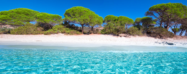 Palombaggia sandy beach with pine trees and azure clear water, Corsica, France, Europe.