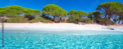 Foto op Canvas Tropical strand Palombaggia sandy beach with pine trees and azure clear water, Corsica, France, Europe.