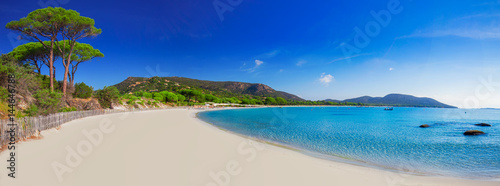 Poster Strand Palombaggia sandy beach with pine trees and azure clear water, Corsica, France, Europe.