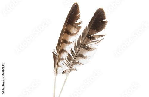 Bird feather isolated