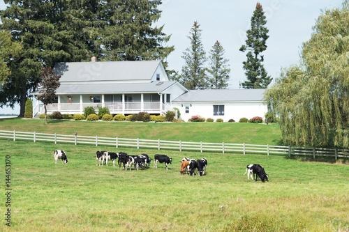 Foto  Cows by Farmhouse