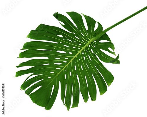 Fotobehang Draw Palm leaf on white background