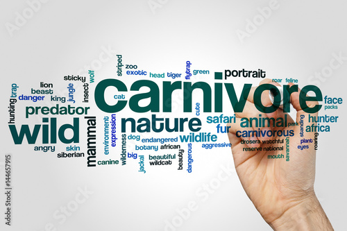 Carnivore word cloud concept on grey background Fototapeta