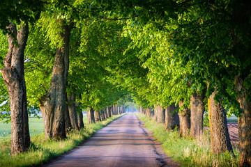 Countryside road among the trees. Masuria, Poland.