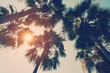 Coconut palm tree on beach in summer with vintage effect.