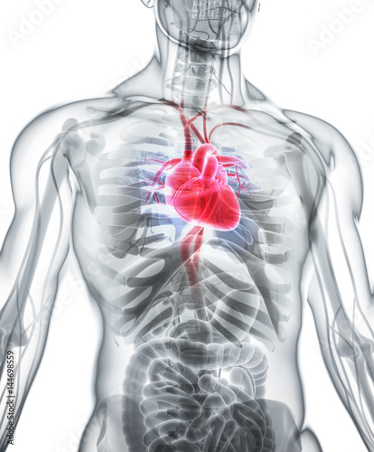 3d-ilustracja-serce-medyczny-pojecie