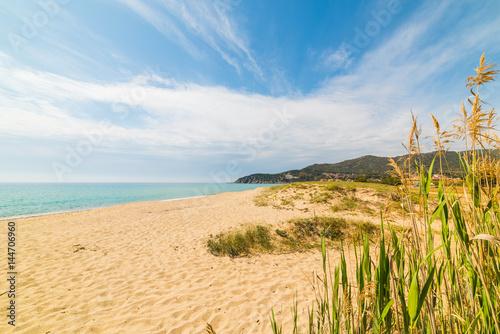 Spoed Foto op Canvas Noordzee Plants in Solanas beach