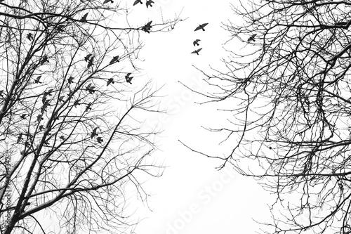 ptaki-na-niebie