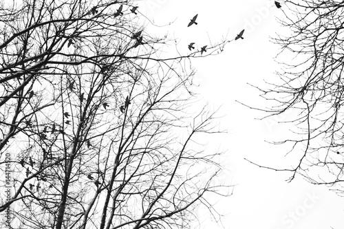 niebo-ptaki