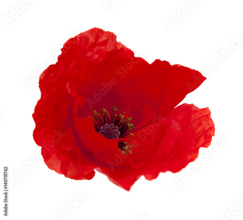 bright red poppy isolated on white Canvas Print