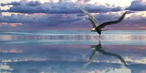Plakat Eagle flying