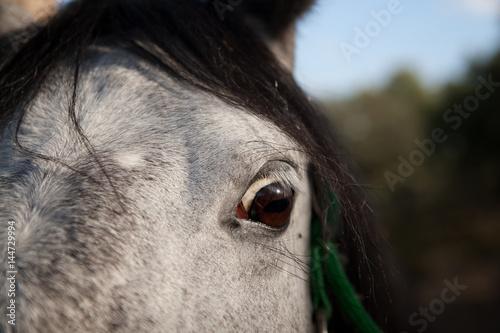 ojos de caballo asustado Wallpaper Mural