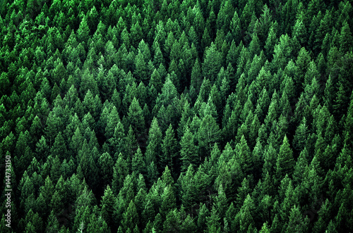 Spoed Fotobehang Bos Forest of Pine Trees in Wilderness Mountains